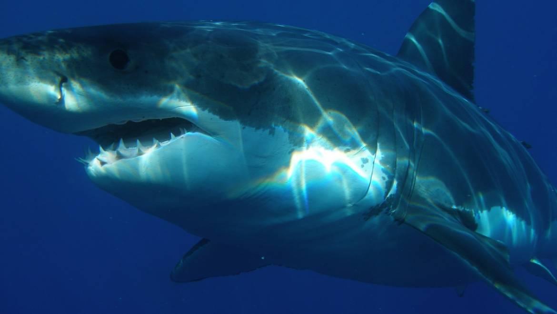 Denti eterni… solo per gli squali!